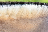 Mane of a pony.