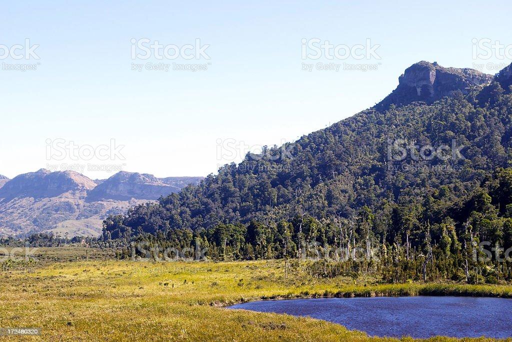 'Mangarakau Swamp, Golden Bay, New Zealand' royalty-free stock photo