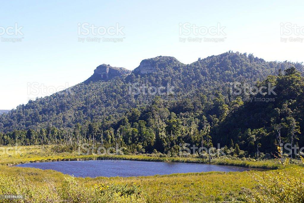 Mangarakau Swamp, Golden Bay,NZ stock photo