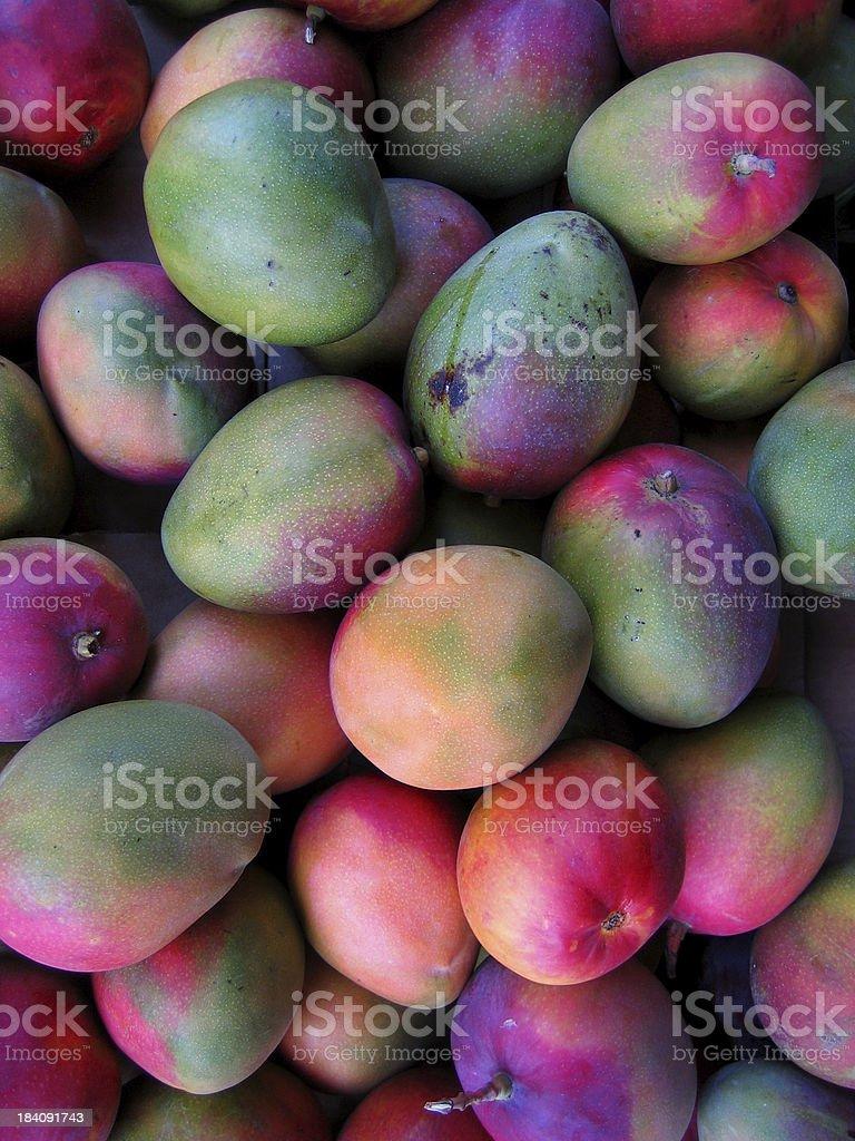 Mango mania stock photo