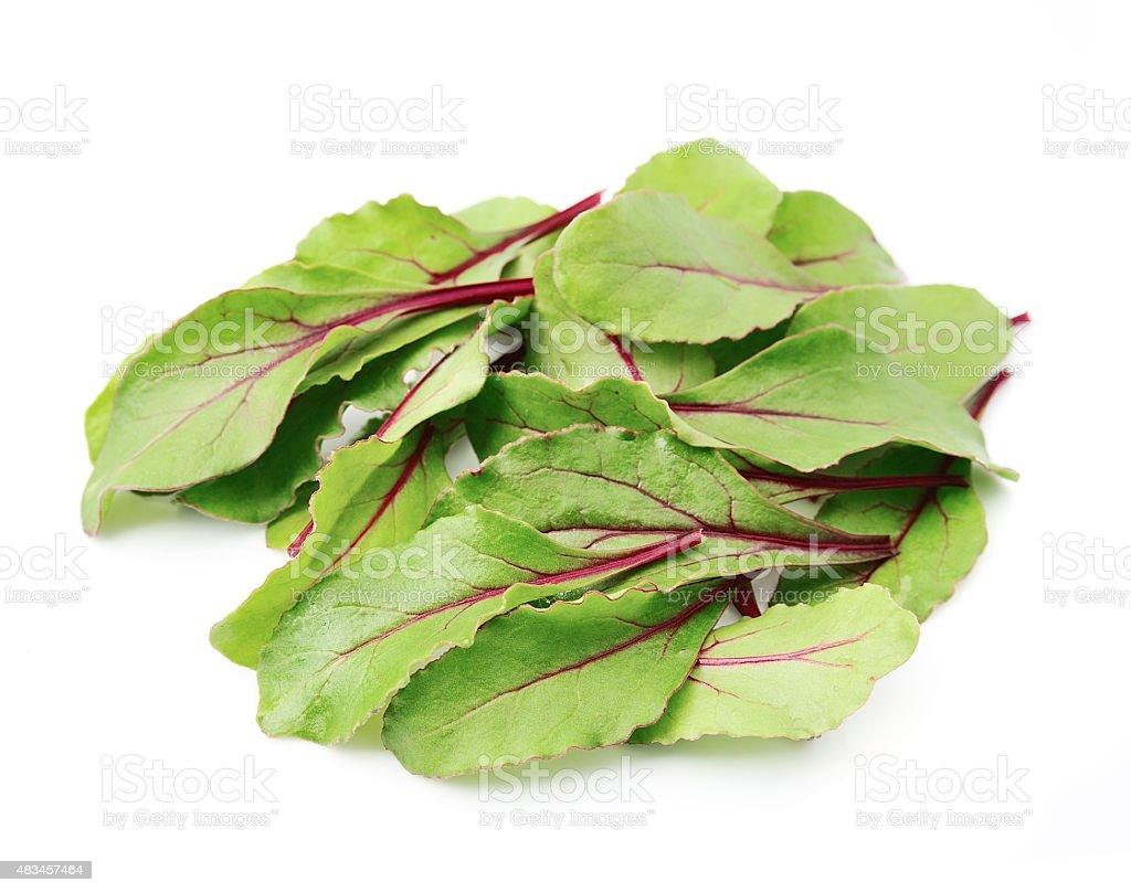 Mangold salad stock photo
