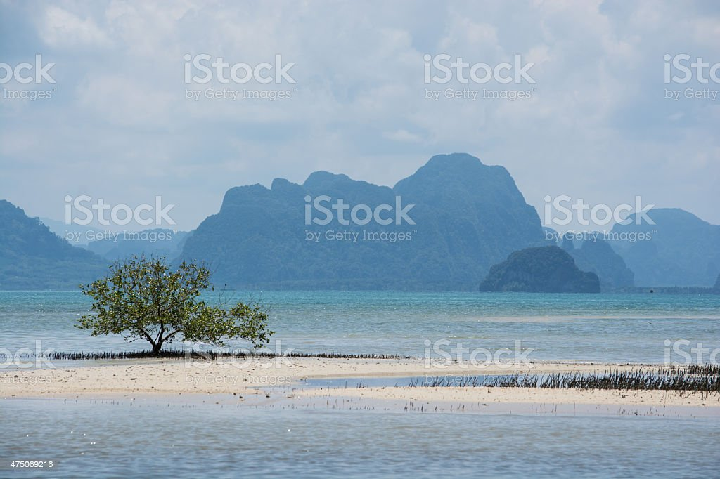 Mangrove at Phang Nga Nationalpark royalty-free stock photo