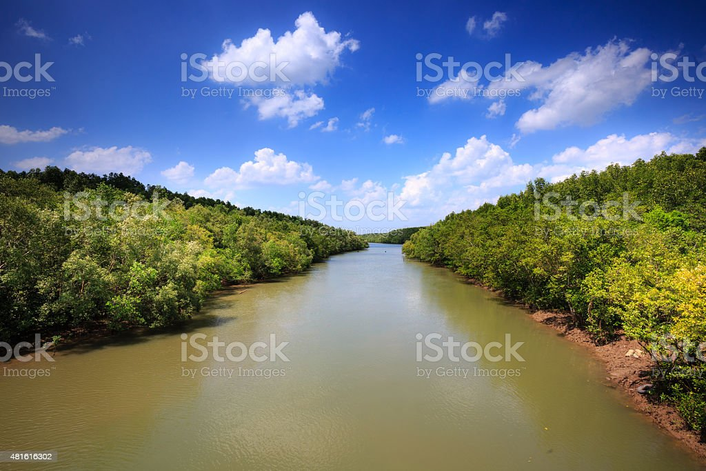 mangrove canal in cangio stock photo