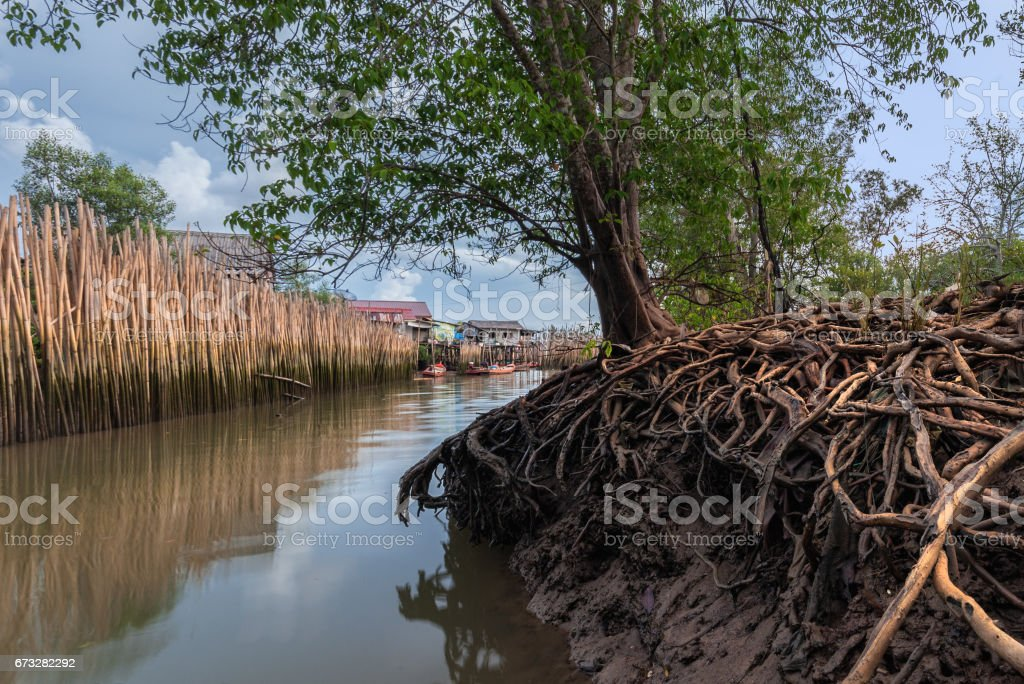 Mangrove forest and blue Sky, Ranong Thailand stock photo
