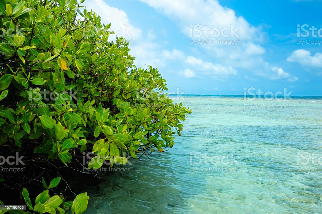 Mangrove forest and shallow waters in a Tropical island royalty-free stock photo