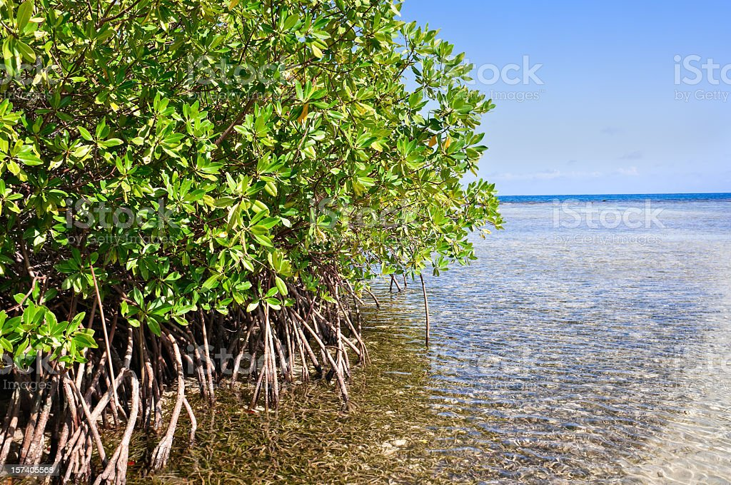 Mangrove forest and shallow waters in a Tropical island stock photo