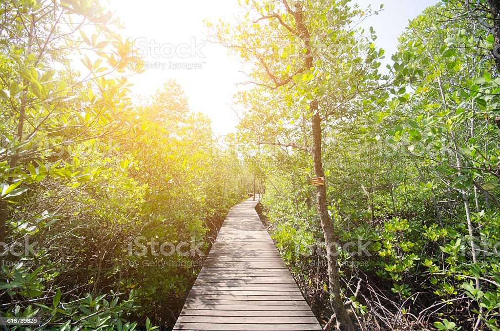 Mangrove forest and wooden walkway,Thailand stock photo