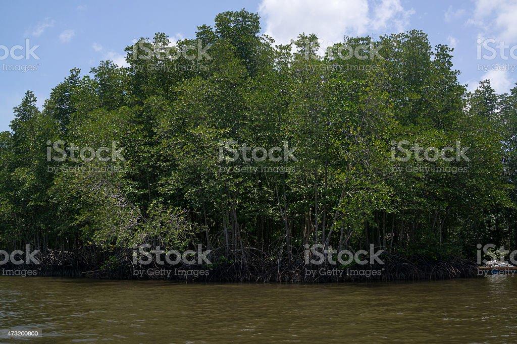 Forêt de Mangrove Chantaburi, en Thaïlande photo libre de droits