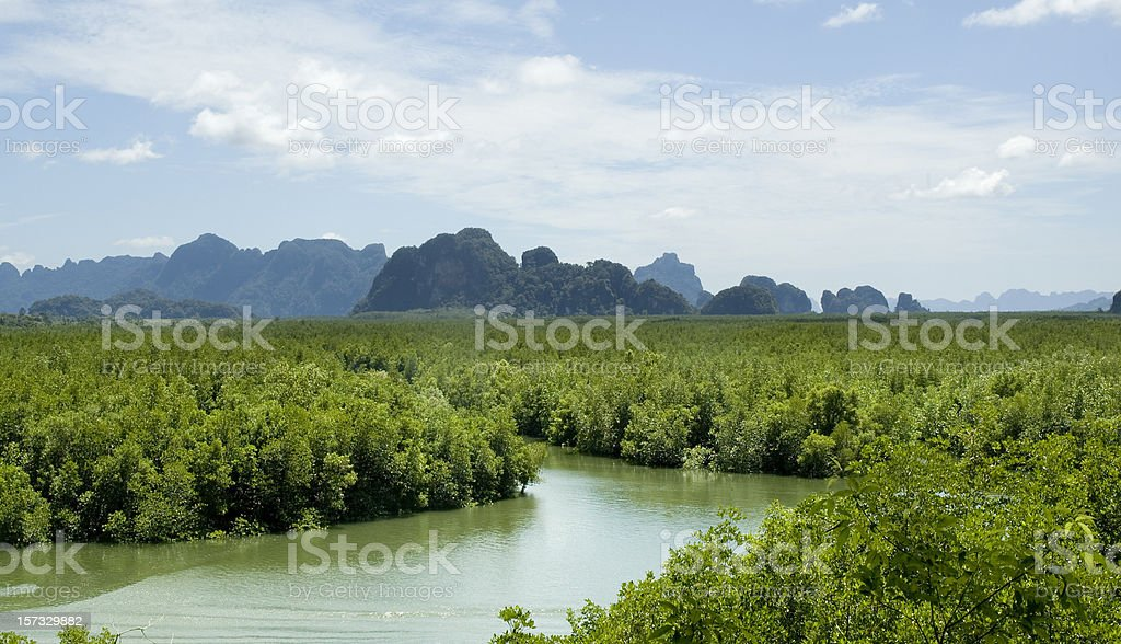 Mangrove Forest In Phang Nga Bay, Thailand stock photo