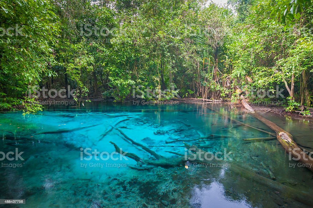 Mangrove forests in Krabi Thailand stock photo