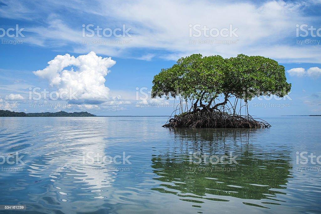 Mangrove Islet In The Caribbean Sea, Bocas del Toro, Panama stock photo