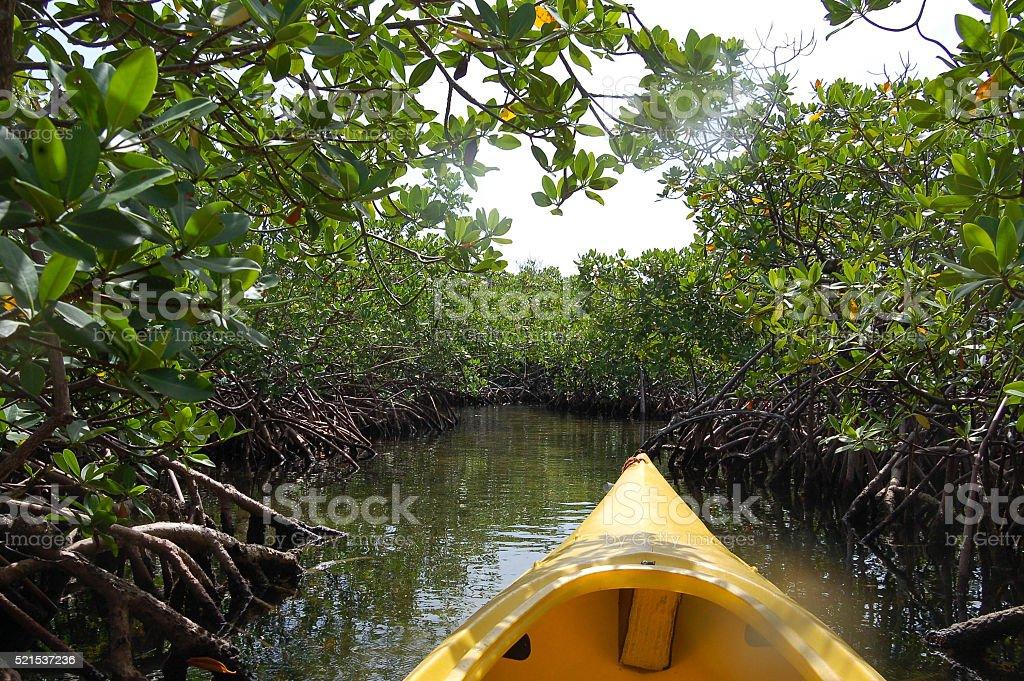 Mangrove kayak stock photo