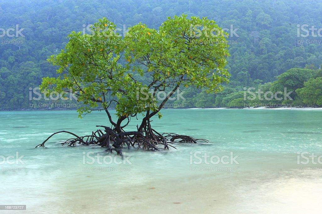 Mangrove on the Sea royalty-free stock photo