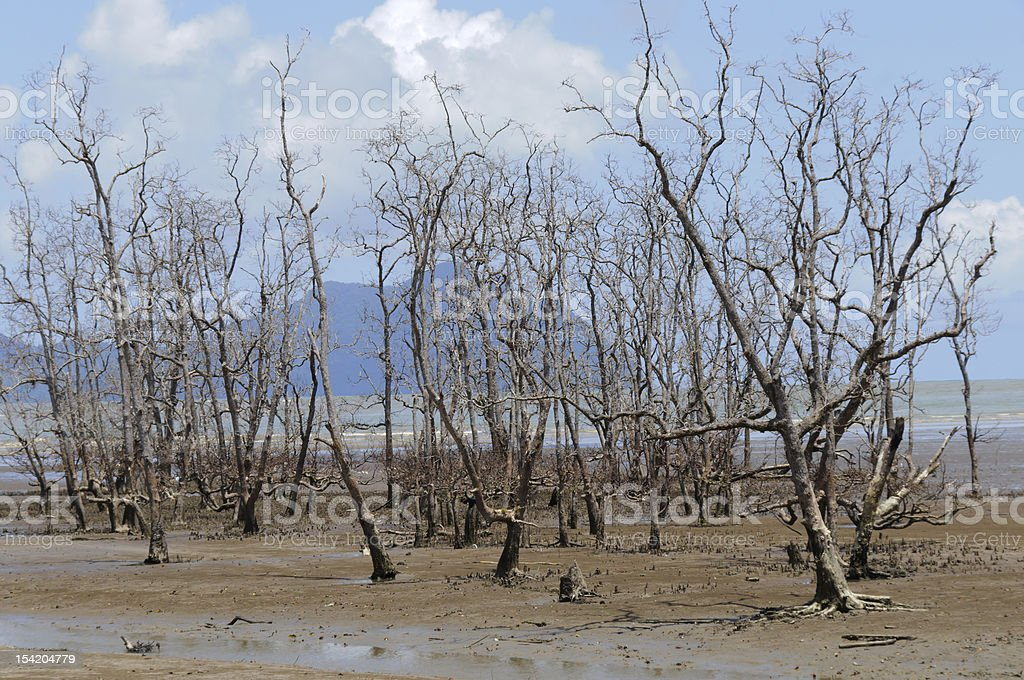 Mangrove royalty-free stock photo