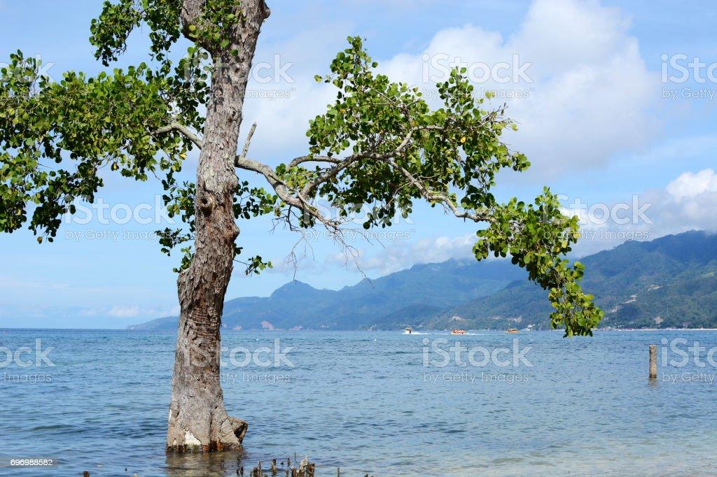 Mangrove tree grow on white sand, blue sea beach under blue cloudy sky stock photo