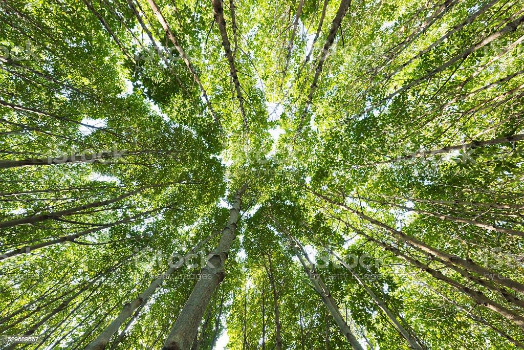 Mangrove tree Low angle view stock photo