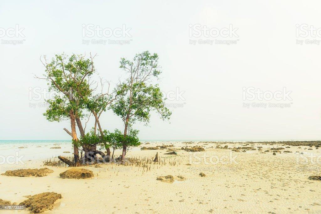 Mangrove tree stock photo