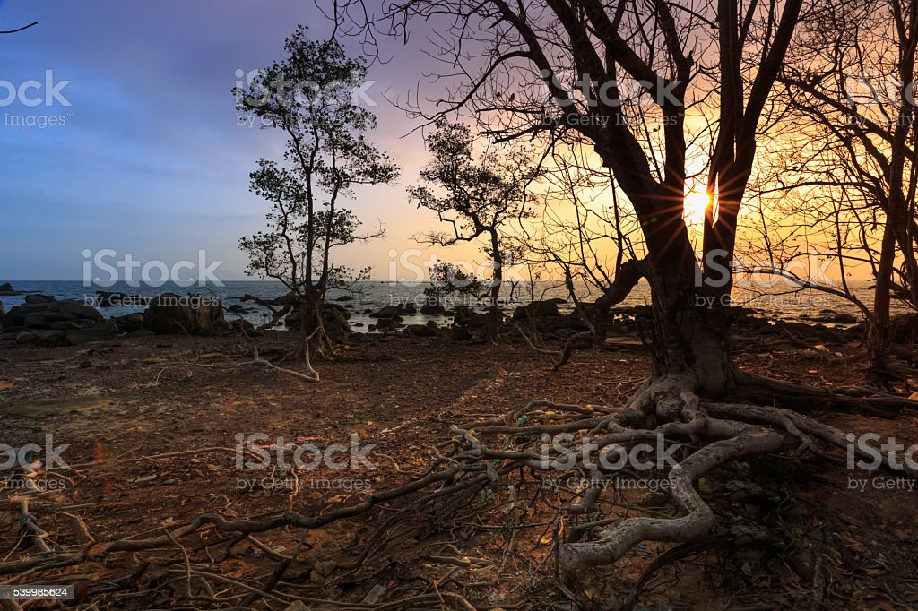 Mangrove trees and landscape dawn scence stock photo