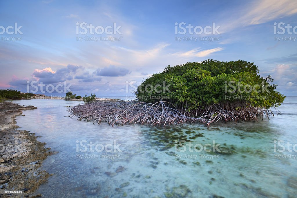 Mangrove trees in a tropical lagoon on Curaçao, Netherlands Antilles stock photo
