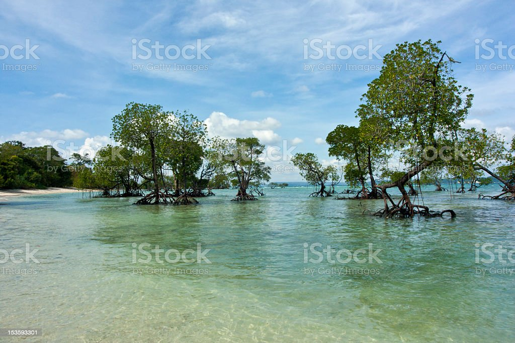 Mangrove Trees stock photo
