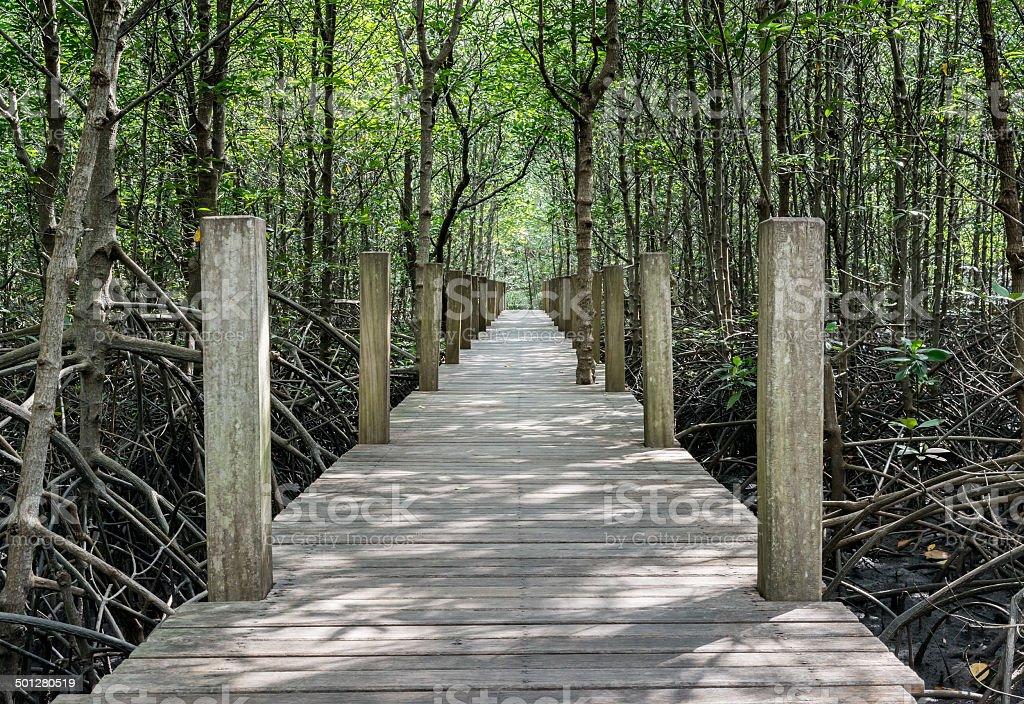Mangrove walk stock photo