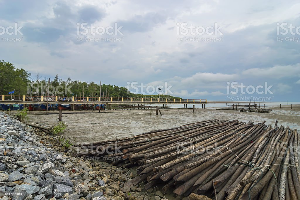 Mangrove wood royalty-free stock photo