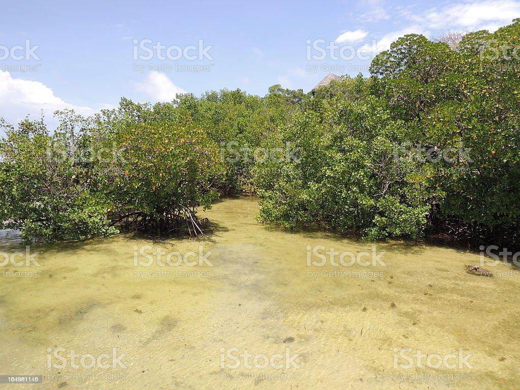 Mangroves during high Tide in Kenya royalty-free stock photo