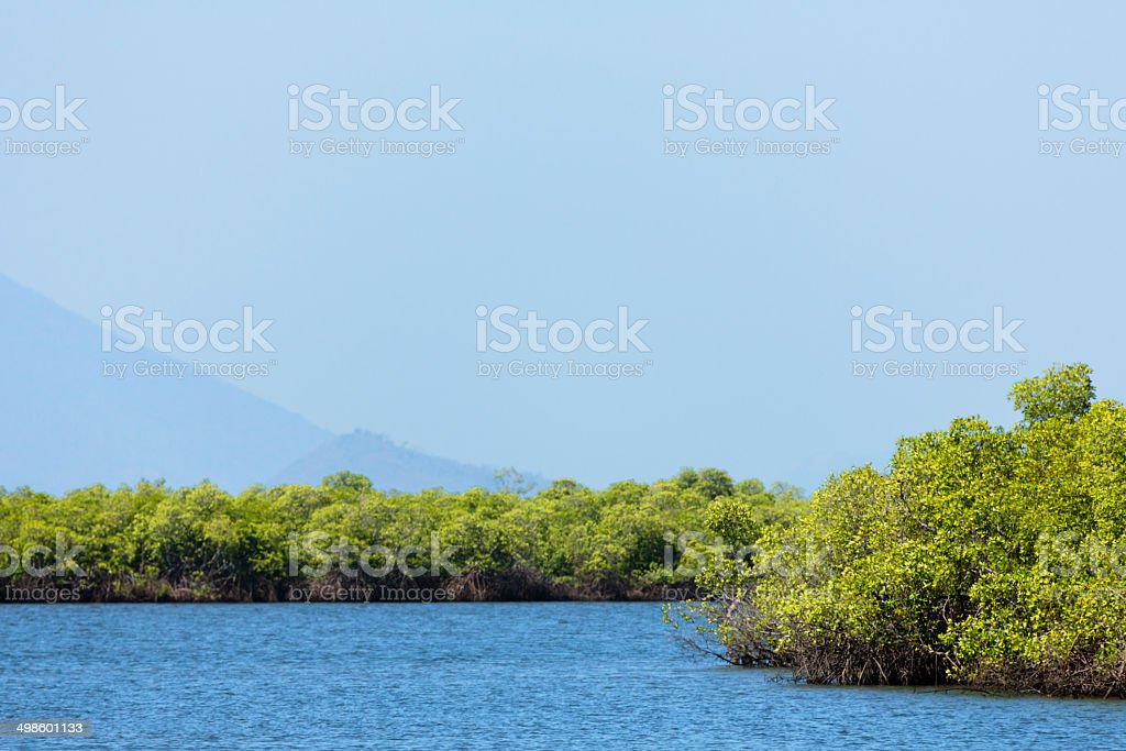 Mangroves in Honduras royalty-free stock photo