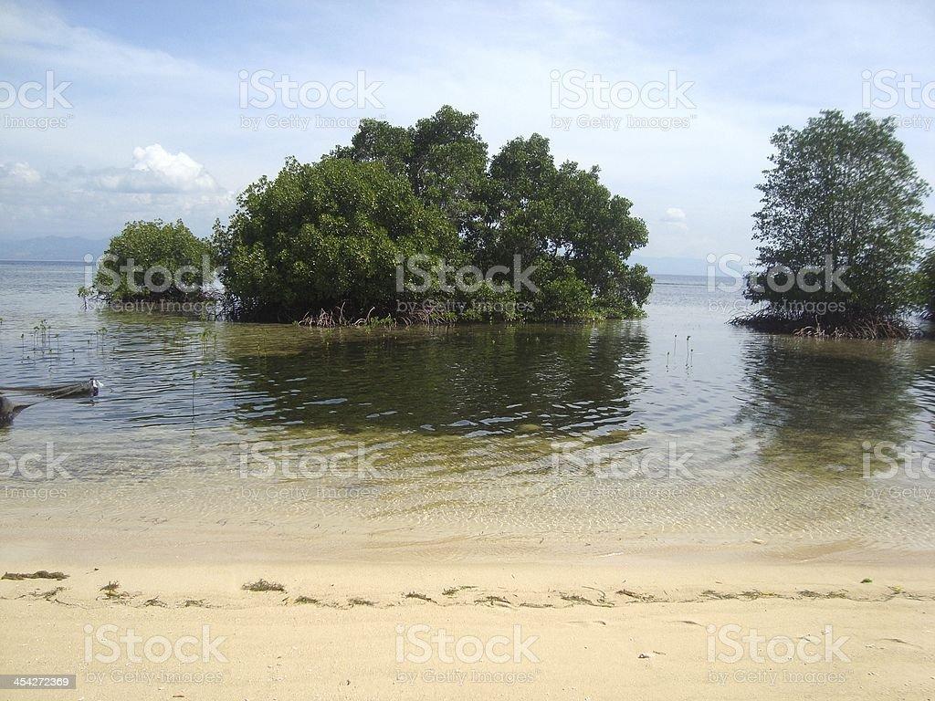 Mangroves, Nusa Lembongan, Indonesia royalty-free stock photo
