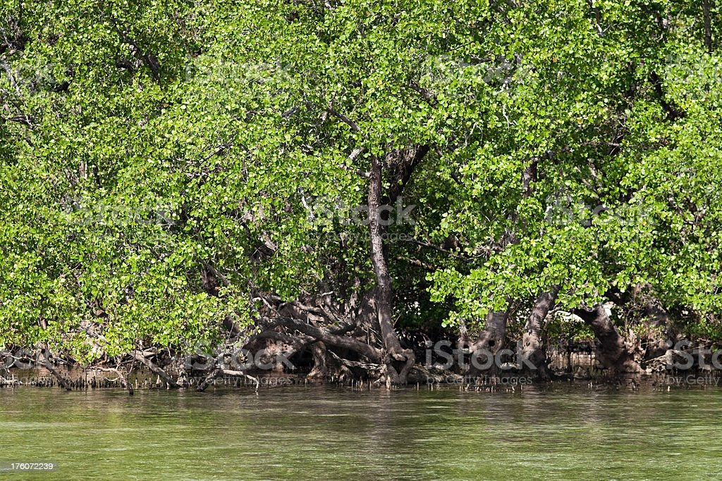 Mangroves of Bunaken Island at half tide seen from outside royalty-free stock photo