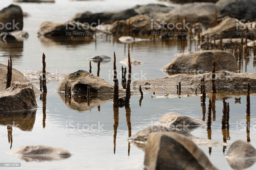 mangroves stock photo