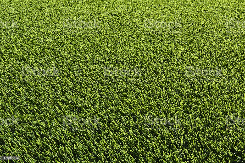 Manicured Green Grass royalty-free stock photo