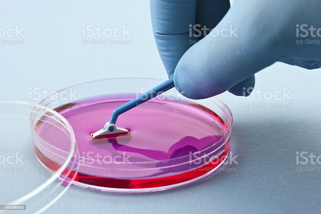Manipulating cell culture royalty-free stock photo