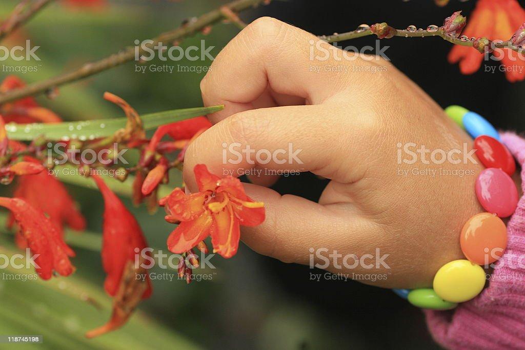 Mano y  flor Macro. stock photo