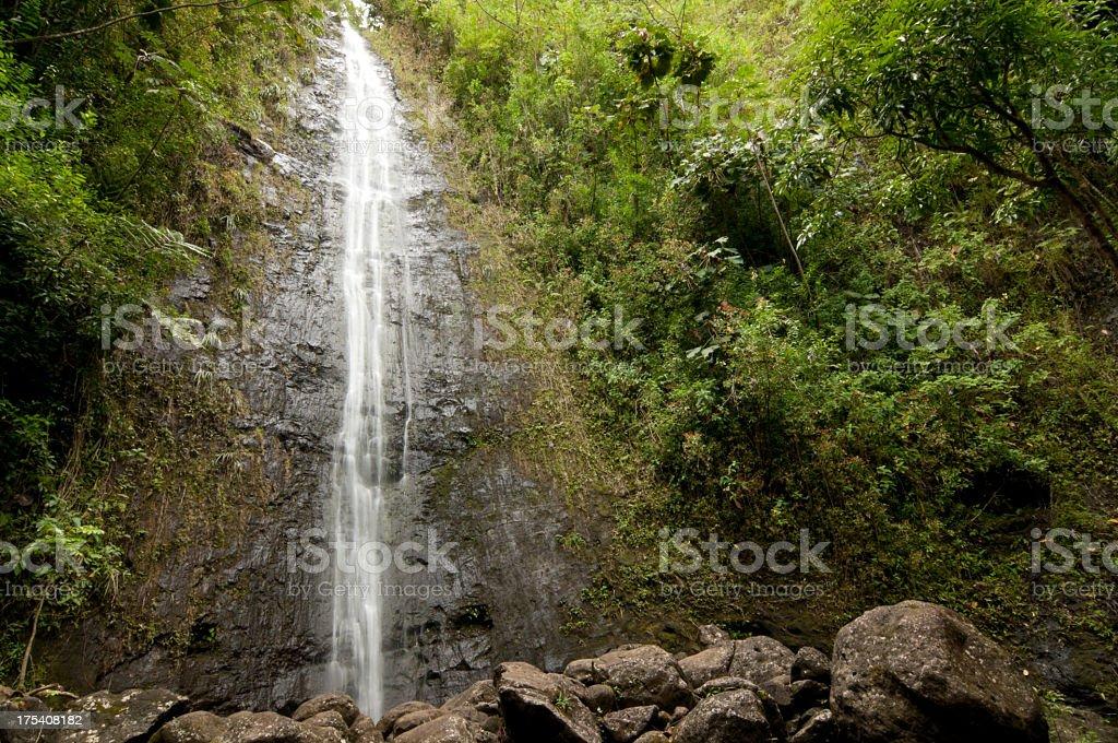 Manoa Falls royalty-free stock photo