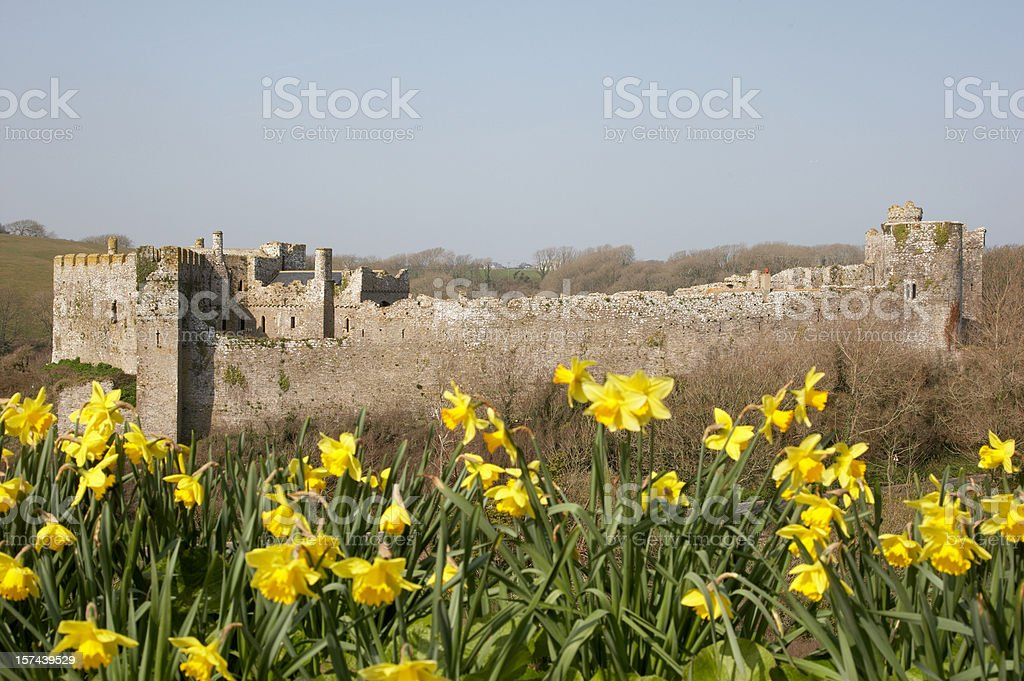 Manorbier Castle Pembrokeshire daffodils stock photo