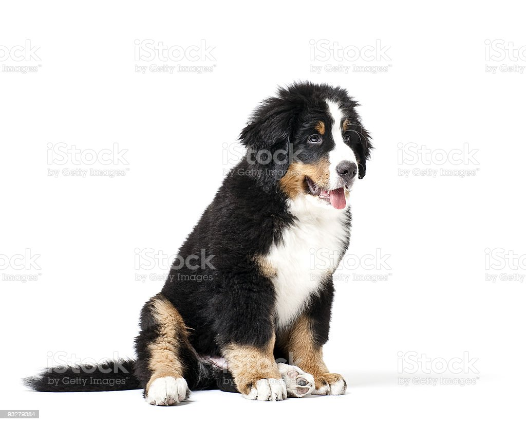 Mans best friend royalty-free stock photo