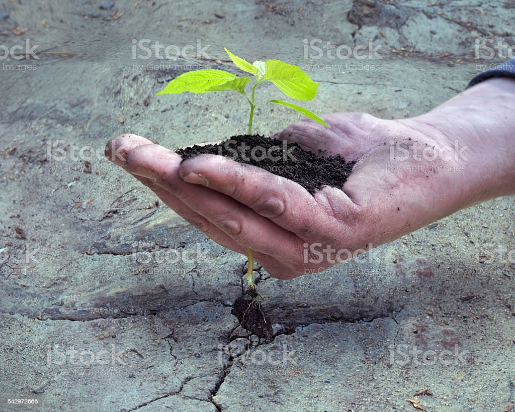 Man's hand holding a young plant stock photo