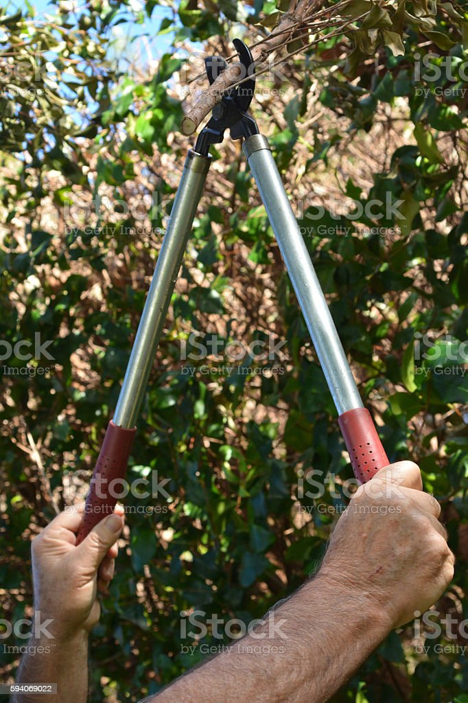 Mans hand use a Tree Pruner stock photo