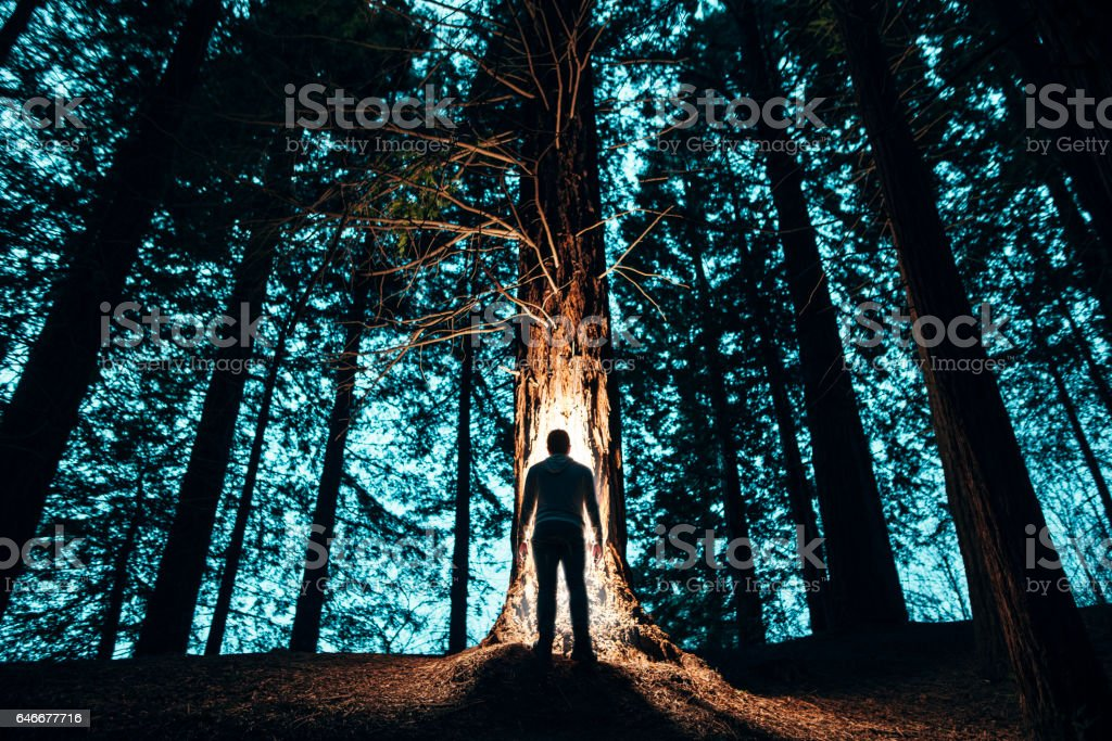 Man's silhouette in the forest stock photo