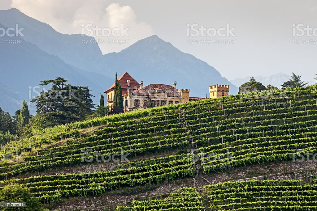 Mansion in the vineyards stock photo
