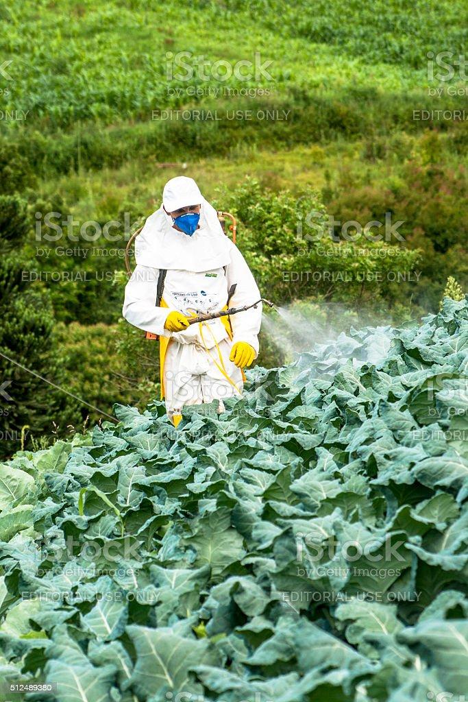 manual pesticide sprayer stock photo