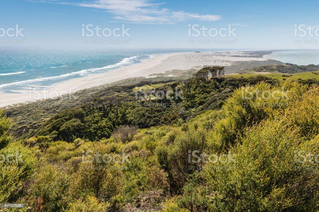 manuka bush at Farewell Spit, Golden Bay, New Zealand stock photo