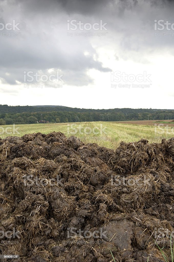 Manure heap stock photo