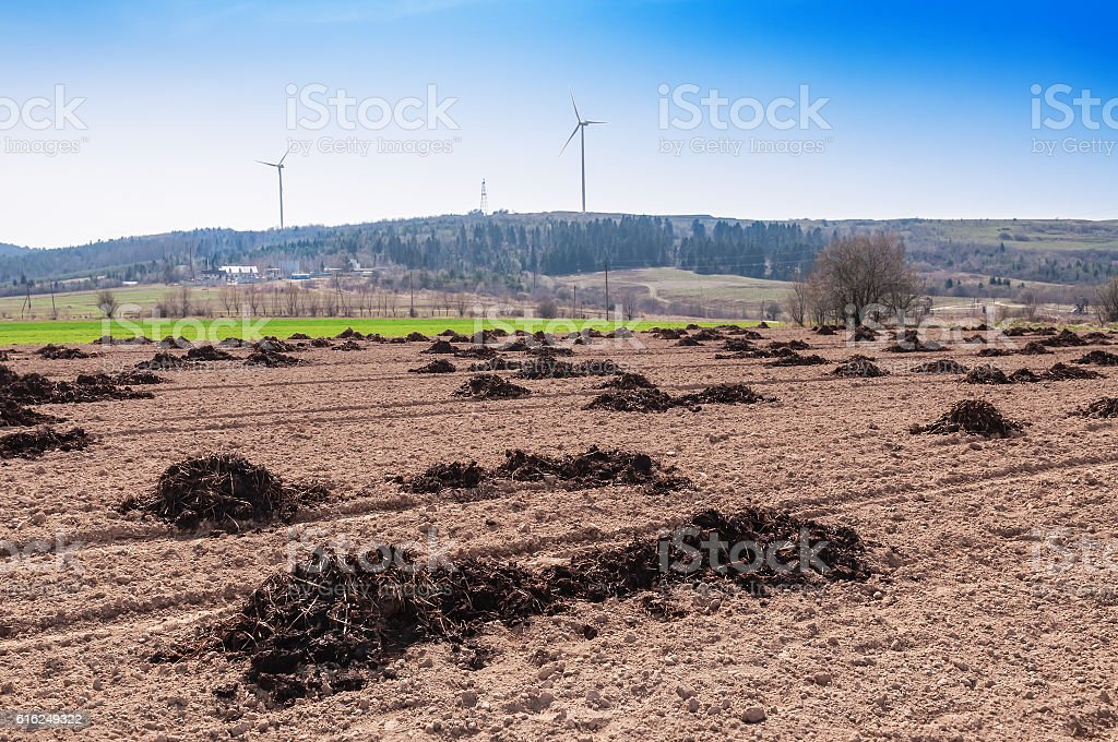 manure on the field stock photo