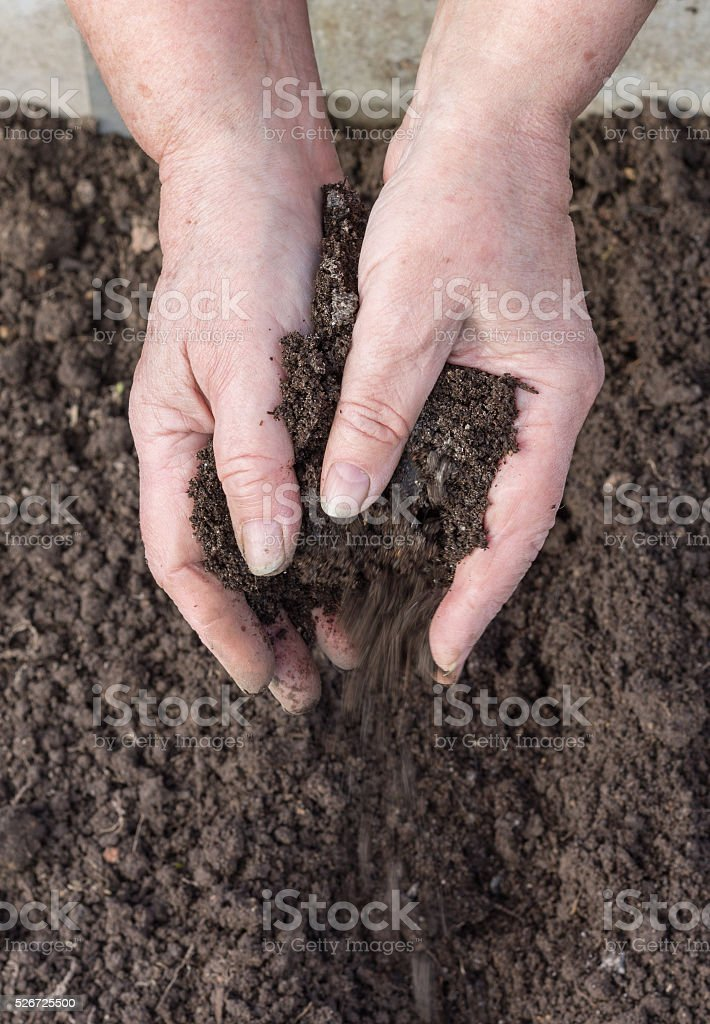 Manuring soil with hands after planted seeds stock photo