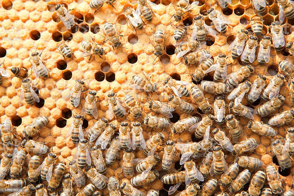 many bees on honeycombs stock photo