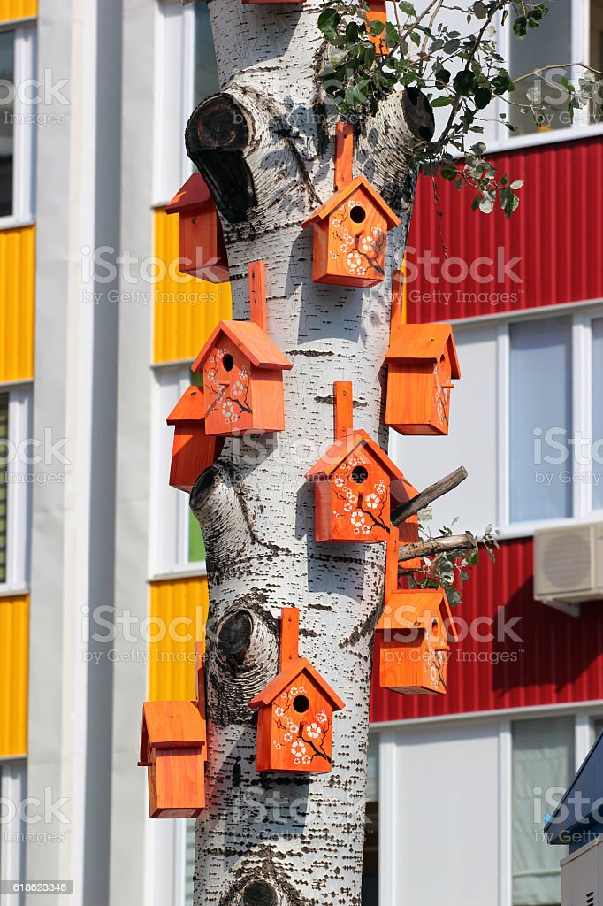 Many bird houses on aspen tree stock photo