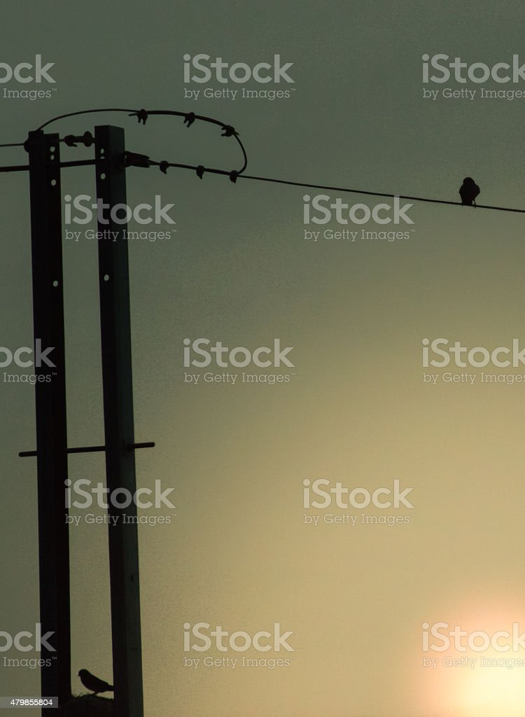 Many birds on cable lines silhouette stock photo