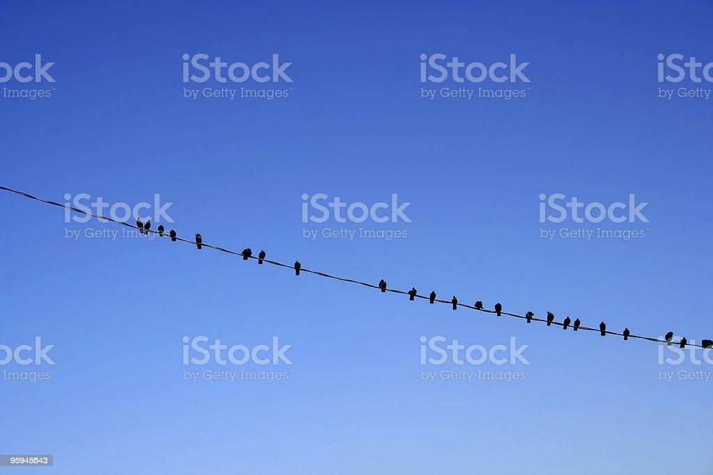 Nombreux noir oiseaux assis sur un fil de fer, Bleu ciel photo libre de droits